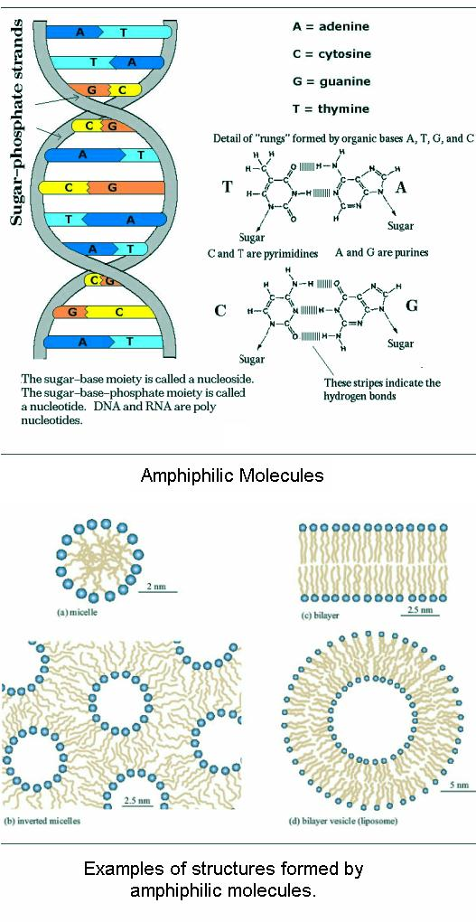 fig-1f-amphiphilic-molecules