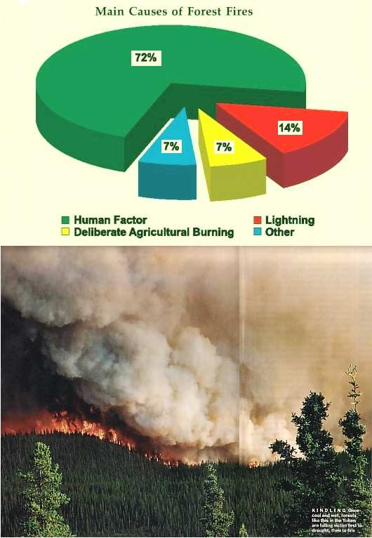 Fig 4 Huge Forest Fires
