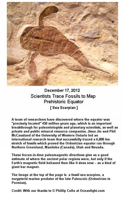 Fossil Sea Scorpian