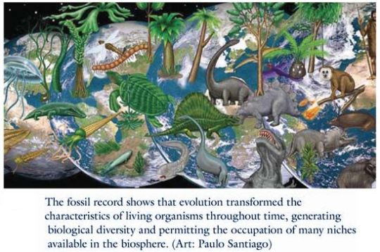 Fossil Records of life