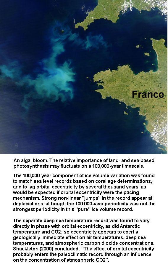 algae-formation-under-sea